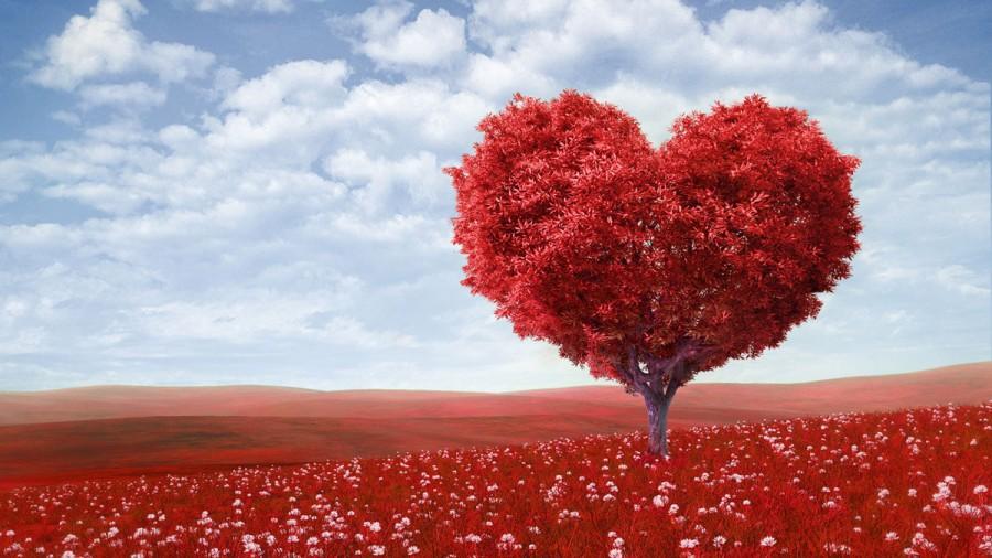 Menu de la Saint-Valentin Océan Gournay
